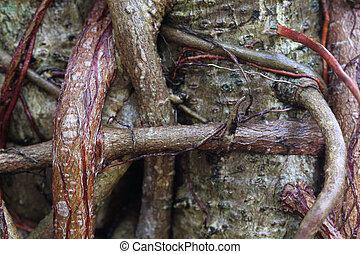 Roots of a Banyan Tree