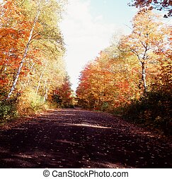 Autumn in Superior National Forest - Bright autumn morning...
