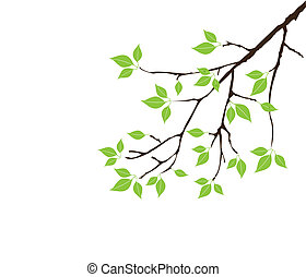 green - vector tree branch with green leaves