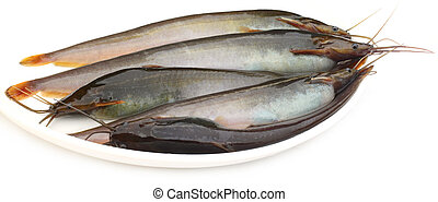Stinging Catfish of Southeast Asia on a white bowl