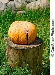 Pumpkin on a tree stump