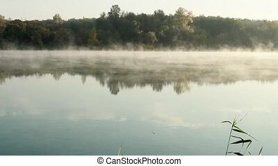 Misty morning on pond