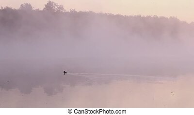 Duck in a fog
