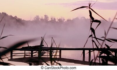 Reeds and bridge in morning mist