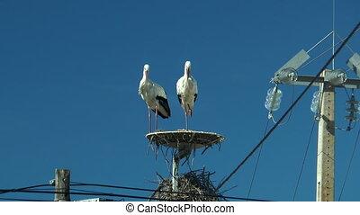 couple of storks taking off