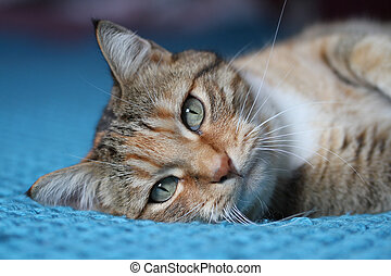 domestic cat on the bed