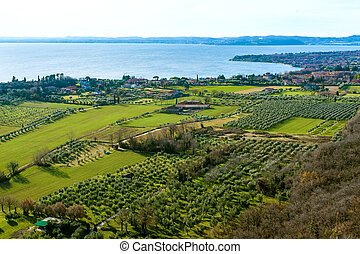 coast of garda lake, desencano, italy (olives fields)