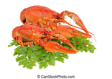 European crayfish - River crayfish on a white background It...