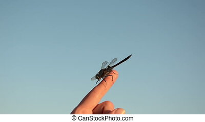 damselfly - on the womans finger tip sits a beautiful...