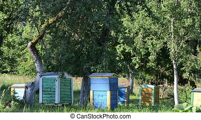 bee hives fruit trees - Colorful bee hives under fruit trees...