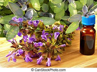 sage, Salvia officinalis
