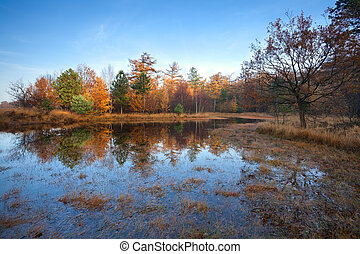 little lake in autumn forest, Duurswoude, Friesland,...