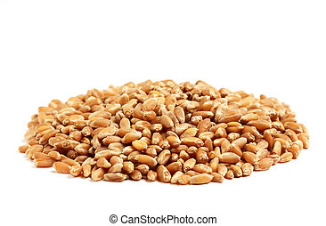Refined grains of wheat . - Group treated wheat grains...