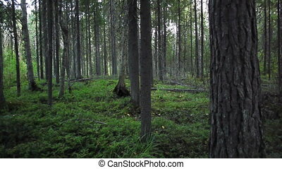 Grass and trees in deep summer forest - Tree poles of mixed...