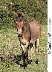 Mule in a Pasture