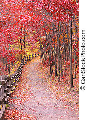 Pathway through an autumn scene, red and ornage