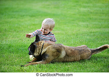 little boy with dog - little boy playing with dog on grass