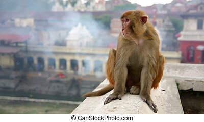 Monkey sitting on wall with traditional architecture in...