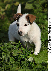 Nice white dog in nature - Nice white dog looking at you in...