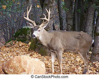 Deer in the forest