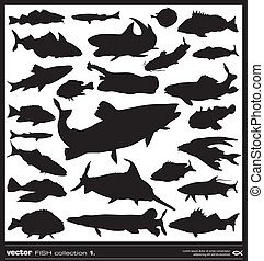 Set of fish silhouette Vector Salt and fresh water fish...