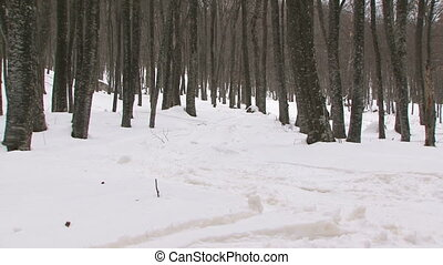 Snowboarding in a forest - Young man snowboarding in a...