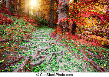 Beautiful autumn forest landscape - Beautiful autumn forest...