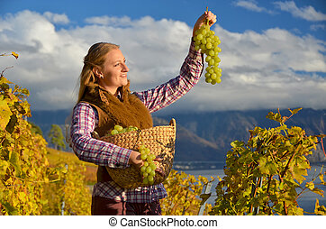 Girl with a basket full of grapes. Lavaux region,...