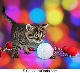 small kitten among Christmas stuff - Small kitten among...
