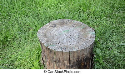 herbalist mint camomile - Herbalist woman hand put wicker...