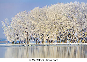 Frosty winter trees near Danube river