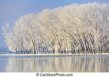 Frosty winter trees near Danube river
