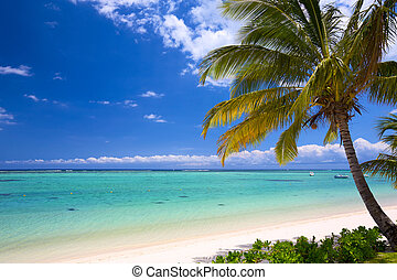 Beautiful tropical beach - White sand beach in Mauritius...