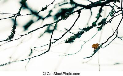 Last leaf of the autumn on tree, focus on last leaf
