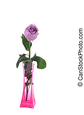 Purple rose in vase