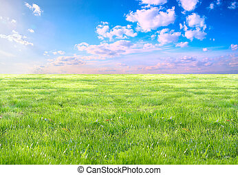 Grass and sky - Sunlit meadows and the bright blue sky