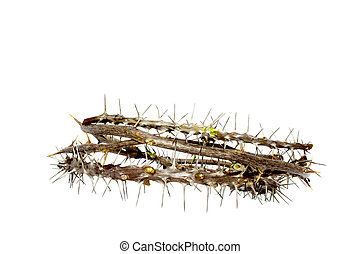 Woven Thorny Branches - Branches of thorns woven into a...