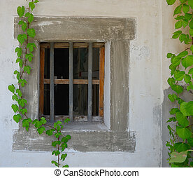 window shutter with ivy on old house wall