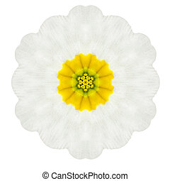 White Concentric Primrose Mandala Flower Isolated on Plain -...