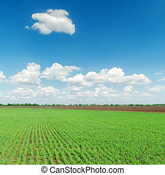 agriculture green field and clouds over it
