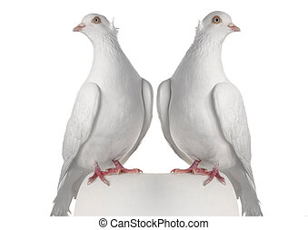 two dove ?n a white background