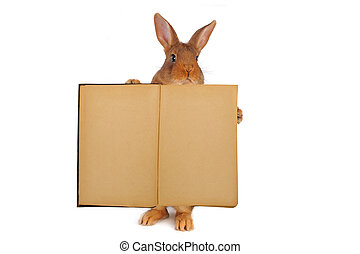 rabbit - Standing rabbit with the old book