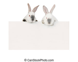 Rabbit - two rabbit with a white background for text drawing...