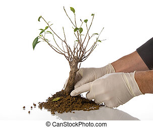 環境, 概念, 木