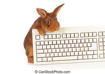 rabbit  - rabbit with the keyboard on a white background