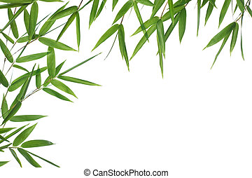 bamboo- leaves - High resolution image of wet bamboo-leaves...