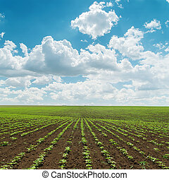 agriculture field with green little shots under cloudy sky