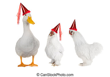 white cocks and ducks on a white background