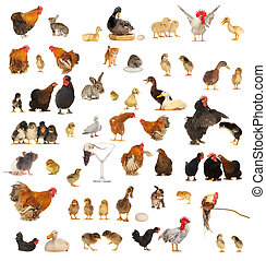 animals - Histories about animals which live on a farm