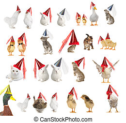 animal - Animals in celebratory caps on a white background